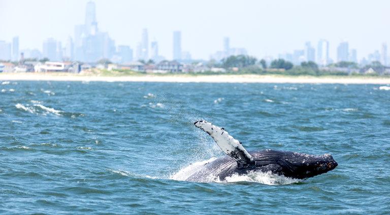 whale-off-rockaway